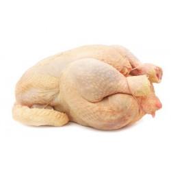Gros poulet prêt à cuire